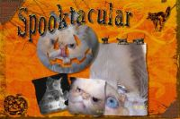 spooktacular-000-Page-1.jpg