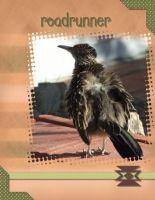 AZ-wildlife-000-Page-1.jpg