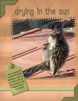 AZ-wildlife-001-Page-2.jpg