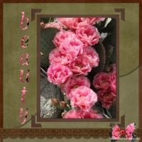 Flowers-002-Desert-Rose.jpg