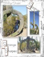 Saguaro-000-Page-1.jpg