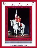 Lorene-Hill-000-Lipizzaner-and-flag.jpg