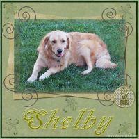 Shelby_April_2007.jpg