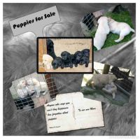 Puppies-for-Sale-000-Page-1.jpg