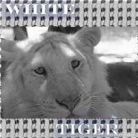 White-Tiger-000-Page-1.jpg