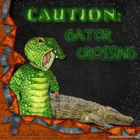 Gator_Crossing-ZanderRS.jpg