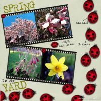 Spring_in_my_Yard_2007.jpg