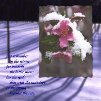 Spring--Buds-000-Page-1.jpg