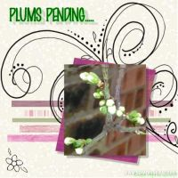 plums_pending_479x479.jpg