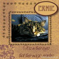 Ernie_479x479.jpg