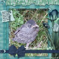 Moonbeam-June-2007-004-Baby-Bird---Aqua-Dreams.jpg