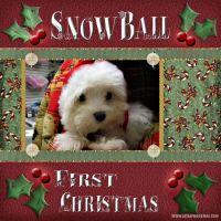 Snowballs1stXmas.jpg