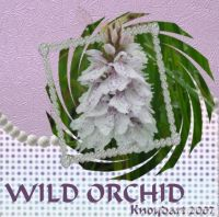 Wild_Orchid3.jpg