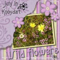 wild_flowers_479x479.jpg