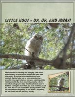 June-2008-_3-000-Little-Hoot-1.jpg