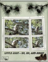 June-2008-_3-001-Little-Hoot-2.jpg