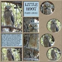 June-2008-_4-007-Little-Hoot.jpg