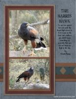 My-Scrapbook-004-The--Harris-Hawk.jpg