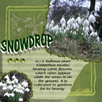 snowdrop_Medium_Web_view.jpg