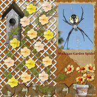 spider-000-Spider.jpg