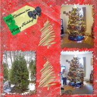 2007-tree-000-Page-1.jpg