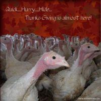 sac_Pre-Thanksgiving-000-Page-1.jpg