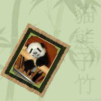 Panda-000-Page-1.jpg