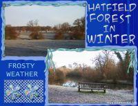 Hatfield-Forest-002-Hatfield-Forest-Winter.jpg