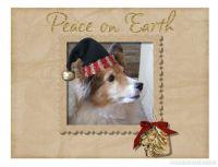 Christmas-Card-2008-002-6_5-x-5---3.jpg