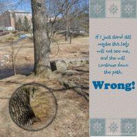 wcw-Wk57Challenge-SquirrelEmail.jpg