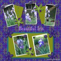 wcw-TrendyTemplates-001-Iris.jpg