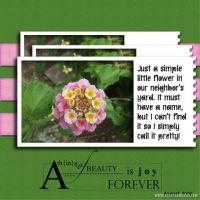 August-2008-_2-000-Flower-macro-for-challenge.jpg