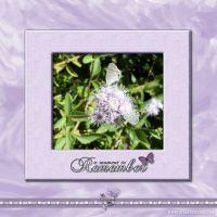 November-2008-_3-000-butterfly-lavender.jpg