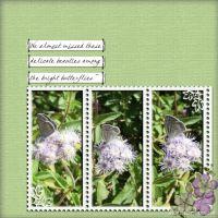 November-2008-_3-001-Butterfly---delicate.jpg