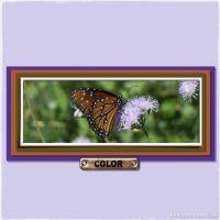 November-2008-_3-002-Butterfly-Dark.jpg