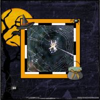 October-2008-Last-One-001-spider-web-2.jpg