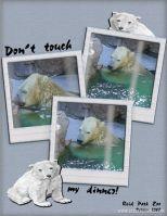 Zoo-2008-_2-001-Polar-Bear-p_-2.jpg