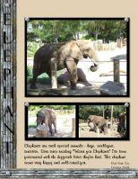 Zoo-October-2008-000-Elephant-Deanne.jpg