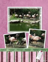 Zoo-October-2008-004-Flamingos.jpg