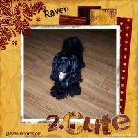 raven-000-Page-1.jpg