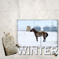 February-2009-_3-002-Horse-in-Snow.jpg
