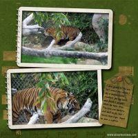 The-Zoo-3_2009-000-Tiger.jpg