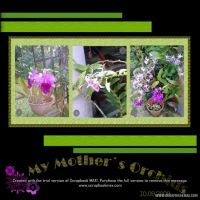 My-Orchids-001-Page-2.jpg