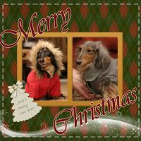 Puppies-Merry-Christmas.jpg