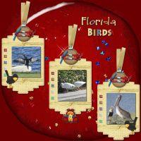 FloridaBirds_1.jpg