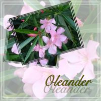 God-is-Real-019-Oleander.jpg