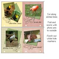 Picture-Formats-008-Page-6.jpg