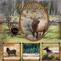 Yellowstone-001-Elk-1.jpg