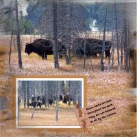 Yellowstone-007-Bison-1.jpg