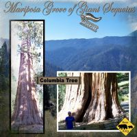 Yosimite-007-Sequoia.jpg